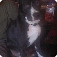 Adopt A Pet :: Freddie - Clay, NY
