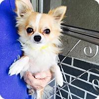 Adopt A Pet :: Duke - St. Petersburg, FL