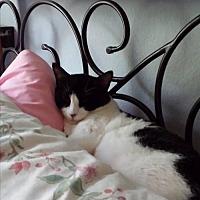 Adopt A Pet :: Christoff - Tustin, CA