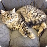 Adopt A Pet :: Chubby - Turnersville, NJ