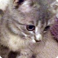 Adopt A Pet :: Dolly - Durham, NC