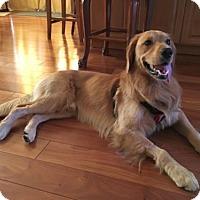 Adopt A Pet :: Warner - Los Angeles, CA