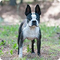 Adopt A Pet :: Bella Boochie - Greensboro, NC