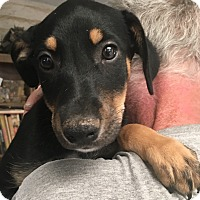 Adopt A Pet :: Evie - Tucson, AZ