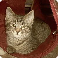 Adopt A Pet :: ELIAS - Medford, WI