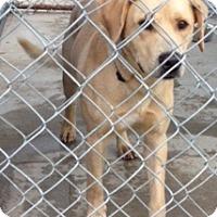 Adopt A Pet :: Tucker - Medora, IN