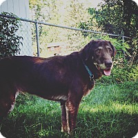 Adopt A Pet :: Agnes - Loudonville, NY