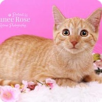 Adopt A Pet :: Gracie - Sterling Heights, MI