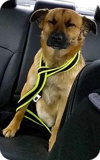Shepherd (Unknown Type) Mix Dog for adoption in Leonardtown, Maryland - Sam (Courtesy Post)