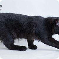 Adopt A Pet :: SPOOKY - Houston, TX
