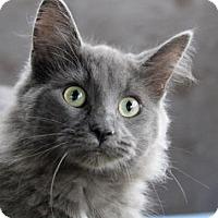 Adopt A Pet :: Hook - Port Hope, ON