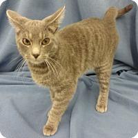 Adopt A Pet :: Josie - Olive Branch, MS