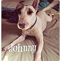 Adopt A Pet :: Johnny - San Antonio, TX
