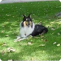 Adopt A Pet :: Boo - San Diego, CA