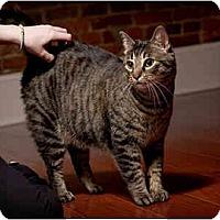 Adopt A Pet :: Dillinger - Owensboro, KY