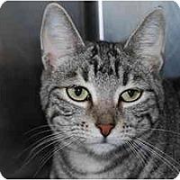 Adopt A Pet :: Cheri - Modesto, CA