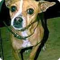 Adopt A Pet :: Mandy - dewey, AZ