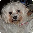 Adopt A Pet :: Leeha (TN)