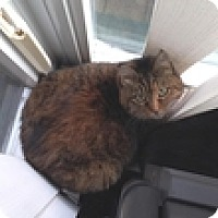 Adopt A Pet :: Hanna - Vancouver, BC