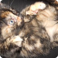 Adopt A Pet :: Mandy - Conyers, GA