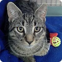 Adopt A Pet :: Taz - Raritan, NJ