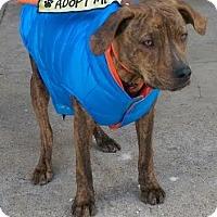 Adopt A Pet :: Rowan - Mount Juliet, TN
