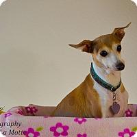 Adopt A Pet :: Lexi - OC - Costa Mesa, CA