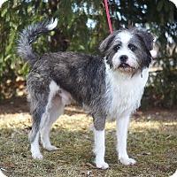 Adopt A Pet :: Benji - Springfield, IL