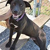 Adopt A Pet :: Steve - Athens, GA