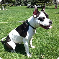 Adopt A Pet :: SKITTLES- PENDING ADOPTION!!! - Birmingham, MI