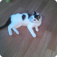 Adopt A Pet :: Tucker - St. Louis, MO