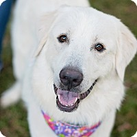 Adopt A Pet :: Audrey - Kingwood, TX