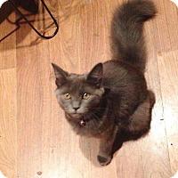 Adopt A Pet :: Peppermint Patty - Trevose, PA