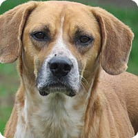 Adopt A Pet :: Timber - Richmond, VA