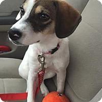 Adopt A Pet :: Dega - Avon, NY