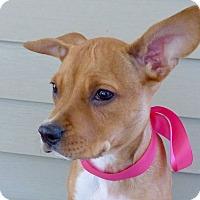 Adopt A Pet :: Bindi - Baton Rouge, LA