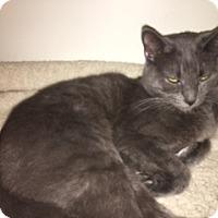 Adopt A Pet :: Smokey - Medina, OH