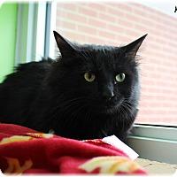 Adopt A Pet :: Minky - Welland, ON