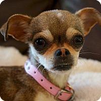 Adopt A Pet :: Mabel - AUSTIN, TX