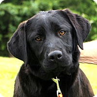 Adopt A Pet :: Madden - Glastonbury, CT