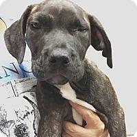 Adopt A Pet :: Keenan - Ft. Lauderdale, FL
