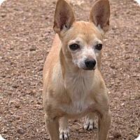 Adopt A Pet :: Annita - Tucson, AZ