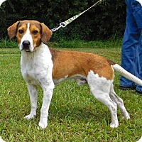 Adopt A Pet :: Doug - St. Francisville, LA