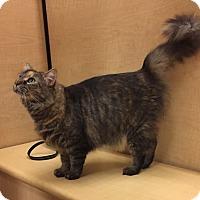 Adopt A Pet :: Secret - Monroe, GA