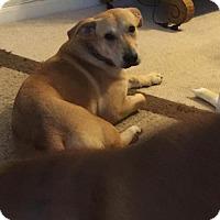 Adopt A Pet :: Lucy - Gainesville, VA