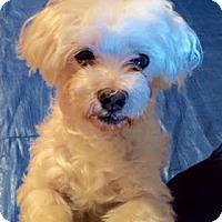 Adopt A Pet :: Brian - Manhattan, NY