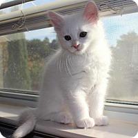Adopt A Pet :: Orchid - Austin, TX