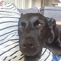 Adopt A Pet :: Anabela - Alpharetta, GA