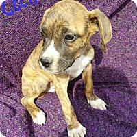 Adopt A Pet :: Cecil - Albany, NC