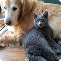Adopt A Pet :: Dahlia - Evansville, IN